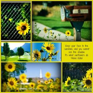 sunflowercollage2